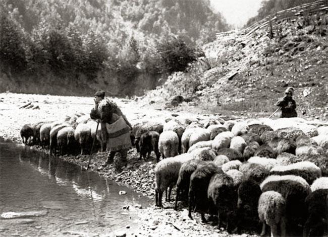 Iosif-Berman-Păstorii